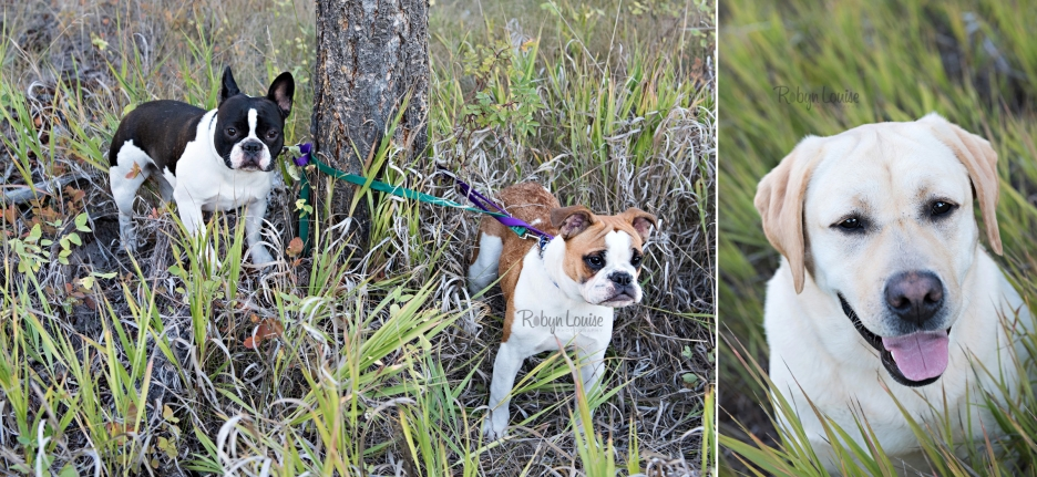 victoria-and-johnny-engagement-hound-dogs-bulldogs-lab-rudy-johnson-bridge-robyn-louise-photography0019